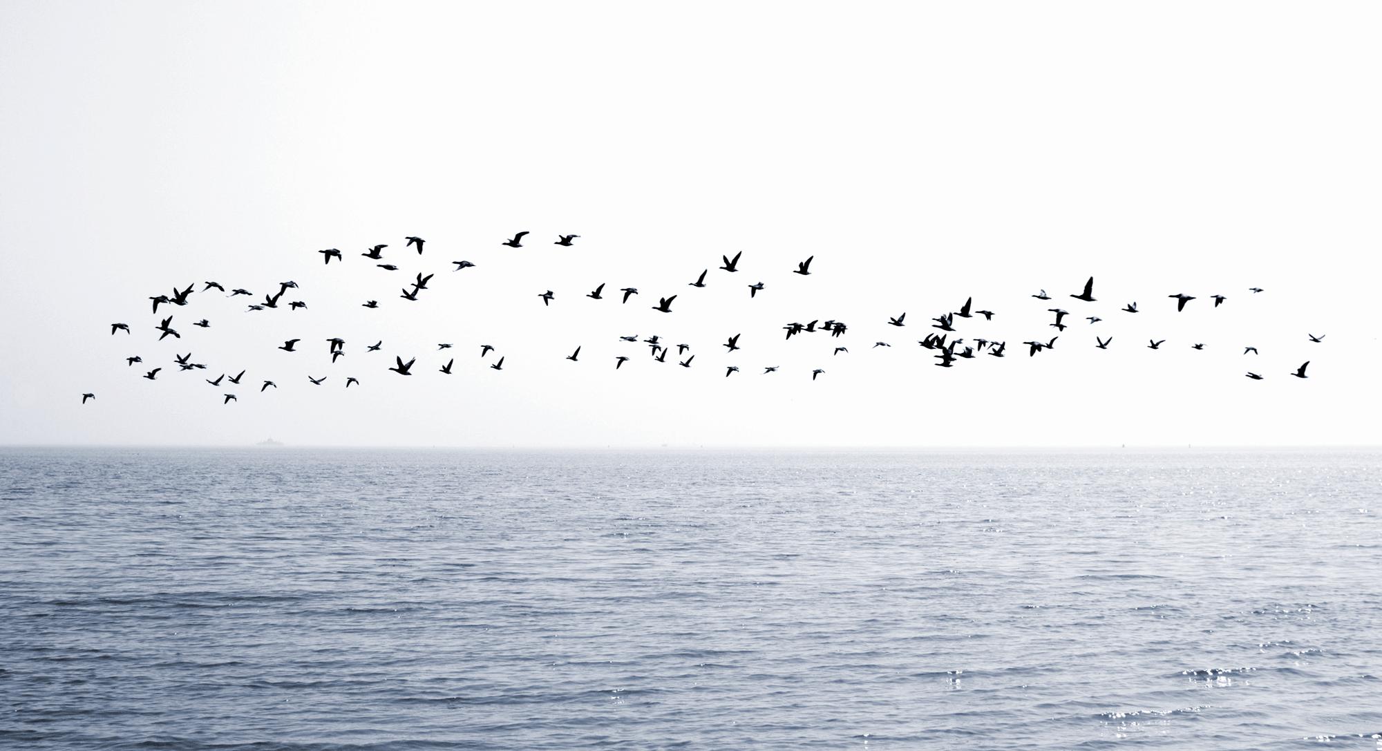 HOME–vogels-vliegen