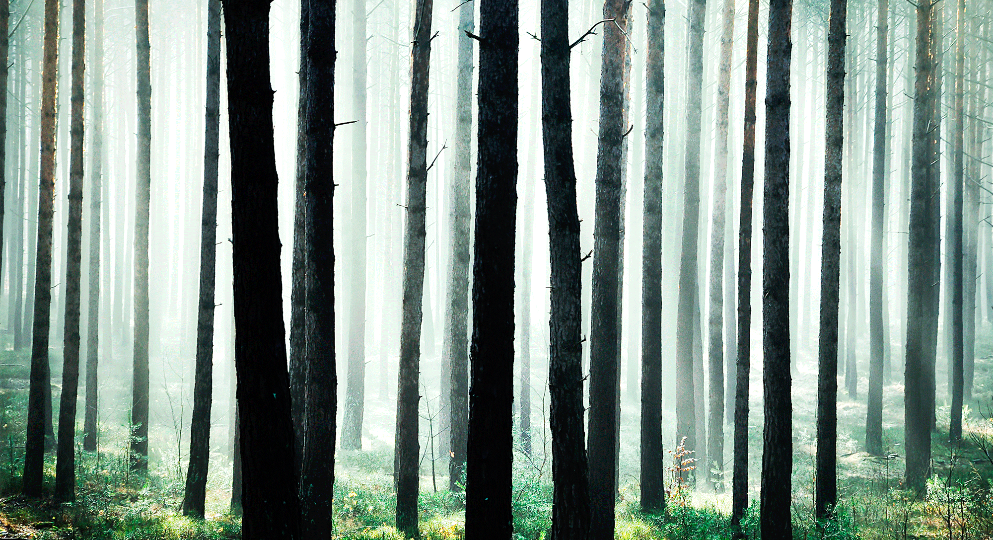HOME–bomen-luisteren